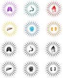 ηλιοφάνεια οργάνων διανυσματική απεικόνιση
