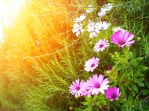 Ηλιοφάνεια πέρα από το πεδίο λουλουδιών Στοκ φωτογραφίες με δικαίωμα ελεύθερης χρήσης