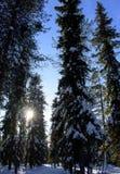 Ηλιοφάνεια στην δασικός-Lapland-Φινλανδία στοκ εικόνες