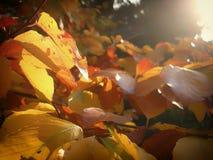 Ηλιοφώτιστος βγάζει φύλλα ενός δέντρου στοκ φωτογραφίες με δικαίωμα ελεύθερης χρήσης
