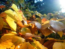 Ηλιοφώτιστος βγάζει φύλλα ενός δέντρου στοκ εικόνα με δικαίωμα ελεύθερης χρήσης