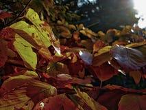 Ηλιοφώτιστος βγάζει φύλλα ενός δέντρου στοκ φωτογραφία με δικαίωμα ελεύθερης χρήσης