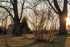 Ηλιοφώτιστος κήπος στη χρυσή ώρα της άνοιξη στοκ εικόνα
