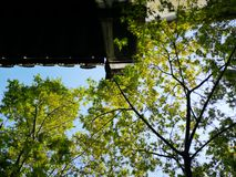 Ηλιοφώτιστος καλύπτει τα φρέσκα φύλλα στοκ φωτογραφία με δικαίωμα ελεύθερης χρήσης