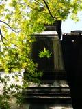 Ηλιοφώτιστος καλύπτει τα φρέσκα φύλλα στοκ εικόνες με δικαίωμα ελεύθερης χρήσης