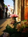 Ηλιοφώτιστος καλύπτει τα φρέσκα φύλλα στοκ φωτογραφία