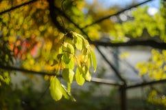 Ηλιοφώτιστος κλάδος δέντρων με τα κίτρινα φύλλα ενάντια σε έναν ζωηρόχρωμο που θολώνεται στοκ φωτογραφίες