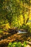 Ηλιοφώτιστος ποταμός σε έναν δασικό, μικρό φυσικό καταρράκτη, σαφές νερό βουνών Στοκ φωτογραφία με δικαίωμα ελεύθερης χρήσης