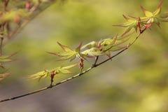 Ηλιοφώτιστος φωτισμός στα φρέσκα φύλλα στοκ φωτογραφία