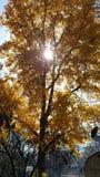 Ηλιοφώτιστο δέντρο στοκ εικόνα