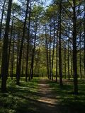 ηλιόλουστα δασικά δέντρα στη Ρωσία Tula Στοκ Εικόνες