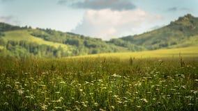 Ηλιόλουστα κυριώτερα σημεία στις κλίσεις των πράσινων λόφων, ανατολή στα βουνά Στοκ φωτογραφία με δικαίωμα ελεύθερης χρήσης