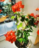Ηλιόλουστα λουλούδια στοκ εικόνα με δικαίωμα ελεύθερης χρήσης