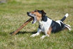 Ηλιόλουστης και θερμής άνοιξη ημέρα παιδικών χαρών σκυλιού, στοκ εικόνα