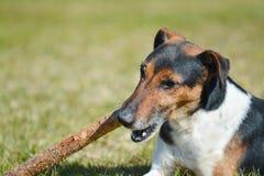 Ηλιόλουστης και θερμής άνοιξη ημέρα παιδικών χαρών σκυλιού, στοκ φωτογραφία με δικαίωμα ελεύθερης χρήσης