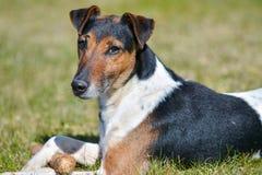Ηλιόλουστης και θερμής άνοιξη ημέρα παιδικών χαρών σκυλιού, στοκ εικόνες με δικαίωμα ελεύθερης χρήσης