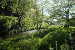 Ηλιόλουστη δασόβια σκηνή με τη ζωγραφική ζευγών easel εκτός από ένα δέντρο από έναν ποταμό Στοκ φωτογραφία με δικαίωμα ελεύθερης χρήσης