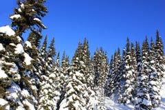 Ηλιόλουστη ημέρα σε ένα winterwonderland στον όμορφο συριστήρα στον Καναδά, Βρετανική Κολομβία στοκ φωτογραφία