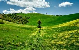 Ηλιόλουστη ημέρα στους πράσινους λόφους της Τοσκάνης άποψη τοπίων Τοσκάνη, Ιταλία, Ευρώπη στοκ εικόνες με δικαίωμα ελεύθερης χρήσης