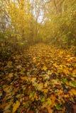 ηλιόλουστη ημέρα στο πάρκο φθινοπώρου στοκ φωτογραφία με δικαίωμα ελεύθερης χρήσης