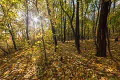 ηλιόλουστη ημέρα στο πάρκο φθινοπώρου στοκ φωτογραφίες