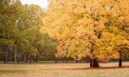 ηλιόλουστη ημέρα στο πάρκο φθινοπώρου στοκ εικόνες με δικαίωμα ελεύθερης χρήσης