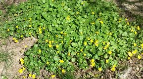 Ηλιόλουστη ημέρα ταπήτων λουλουδιών Στοκ Εικόνα