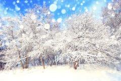 Ηλιόλουστη ημέρα των Χριστουγέννων Στοκ φωτογραφία με δικαίωμα ελεύθερης χρήσης