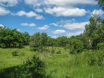 Ηλιόλουστη θερινή ημέρα φύσης με το μπλε ουρανό Στοκ φωτογραφία με δικαίωμα ελεύθερης χρήσης