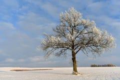 Ηλιόλουστη χειμερινή ημέρα δέντρο πεδίων Στοκ Φωτογραφία