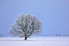 Ηλιόλουστη χειμερινή ημέρα δέντρο πεδίων Στοκ Εικόνες