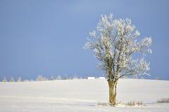 Ηλιόλουστη χειμερινή ημέρα μόνο δέντρο πεδίων Στοκ Εικόνες