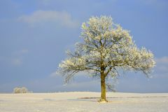 Ηλιόλουστη χειμερινή ημέρα μόνο δέντρο πεδίων Στοκ Φωτογραφία