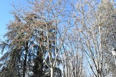 Ηλιόλουστη χειμερινή ημέρα στη Μαδρίτη Ισπανία Στοκ εικόνες με δικαίωμα ελεύθερης χρήσης