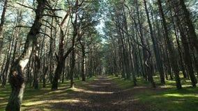 Ηλιόλουστοι πράσινοι δάσος και δρόμος μεταξύ των υψηλών δέντρων