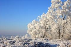 ηλιόλουστος χειμερινός τοπίων σημύδων Στοκ Εικόνα