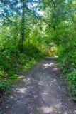 Ηλιόλουστο απόγευμα ανοίξεων πορειών τροπικών δασών Redwood στοκ φωτογραφία με δικαίωμα ελεύθερης χρήσης