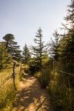 Ηλιόλουστο δάσος κέδρων - Λίβανος στοκ φωτογραφία με δικαίωμα ελεύθερης χρήσης