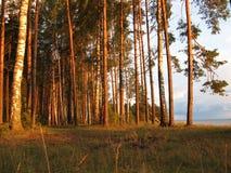 ηλιόλουστο δάσος Στοκ εικόνα με δικαίωμα ελεύθερης χρήσης