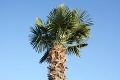 ηλιόλουστο δέντρο φοινικών ημέρας στοκ εικόνες