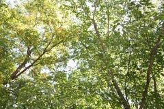 ηλιόλουστο δέντρο Στοκ Εικόνα