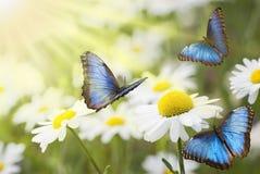 Ηλιόλουστο λιβάδι με τις πεταλούδες στοκ εικόνα