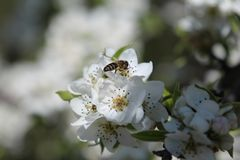 Ημέρα άνοιξη, ανθίζοντας δέντρα, πρώτη άνθιση λουλουδιών στοκ εικόνες με δικαίωμα ελεύθερης χρήσης