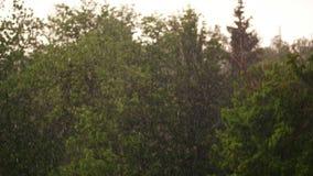 Ημέρα άνοιξη, καταιγίδα στην πόλη, ισχυρός άνεμος και βροχή, μια νεροποντή με το χαλάζι εστίαση στις μεγάλες πτώσεις της βροχής,  απόθεμα βίντεο