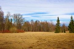 Ημέρα άνοιξη στο πάρκο Pavlovsk Πετρούπολη Άγιος Στοκ Εικόνα
