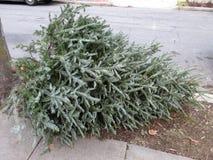 Ημέρα απορριμμάτων για τα χριστουγεννιάτικα δέντρα στοκ φωτογραφίες