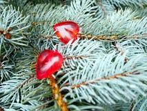 Ημέρα βαλεντίνων ` s, εραστές των κόκκινων καρδιών στοκ φωτογραφία με δικαίωμα ελεύθερης χρήσης