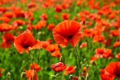 Ημέρα ενθύμησης, ημέρα Anzac, ηρεμία στοκ εικόνες