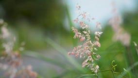 Ημέρα θερινών πράσινη λουλουδιών φύσης απόθεμα βίντεο