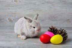 ημέρα Πάσχα ευτυχές Κουνέλι με τα ζωηρόχρωμα αυγά Πάσχας στο ξύλο Χαριτωμένο κουνέλι λαγουδάκι Πάσχας με τα χρωματισμένα αυγά Πάσ στοκ φωτογραφία με δικαίωμα ελεύθερης χρήσης